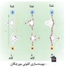 بهینه سازی کلونی مورچگان